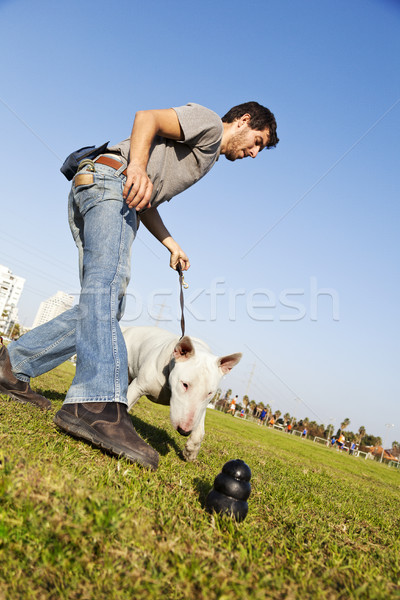 Bull Terrier Reaching for Chew Toy at Park Stock photo © eldadcarin