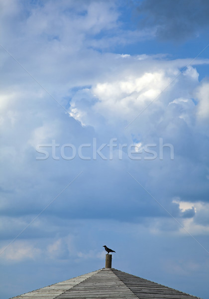 Crow on a Roof Stock photo © eldadcarin