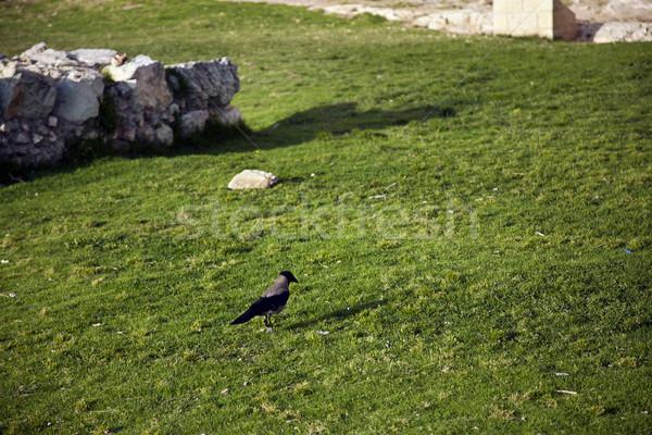 Linii trawy spaceru trawnik ściany starych Zdjęcia stock © eldadcarin