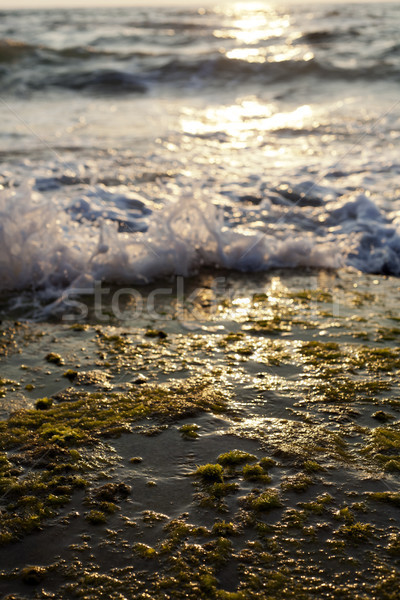 Stock photo: Waves Crushing on Seaweed Rock