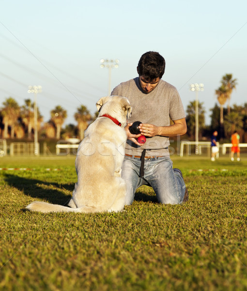 Labrador Dog and Trainer with Chew Toys in Park Stock photo © eldadcarin