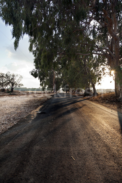 Afternoon Country Road Stock photo © eldadcarin