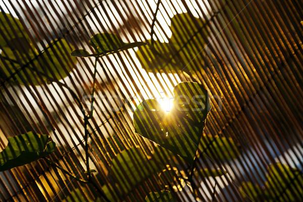 Tarde folha coração planta Foto stock © eldadcarin