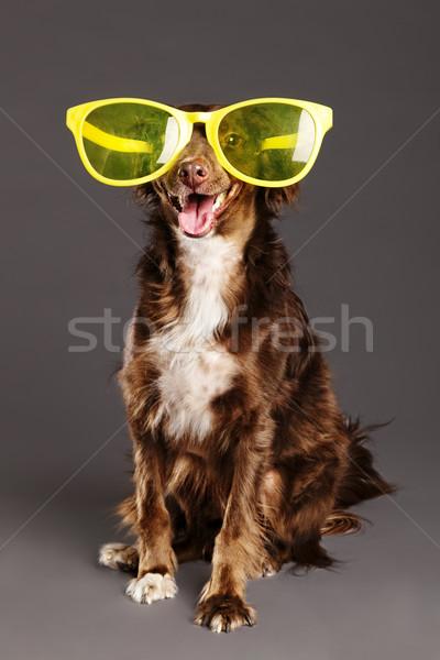 коричневая собака смешные очки студию портрет смешанный Сток-фото © eldadcarin