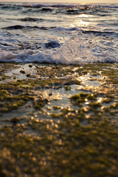 Wave Smashing on Seaweed Rock Stock photo © eldadcarin