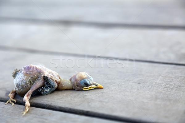 Halott csirke holttest fából készült fedélzet madár Stock fotó © eldadcarin