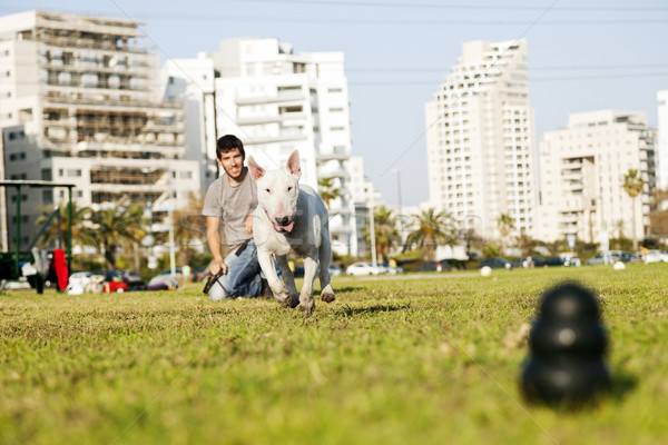 Bull Terrier Running for Chew Toy in Park Stock photo © eldadcarin