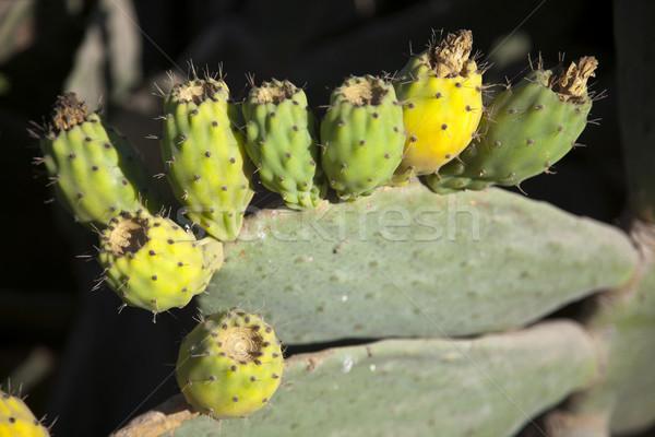 Prickly Pear Fruit Stock photo © eldadcarin