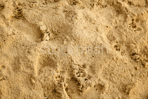 Damp Sand Stock photo © eldadcarin