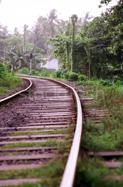 Railroad Tracks in the Jungle Stock photo © eldadcarin