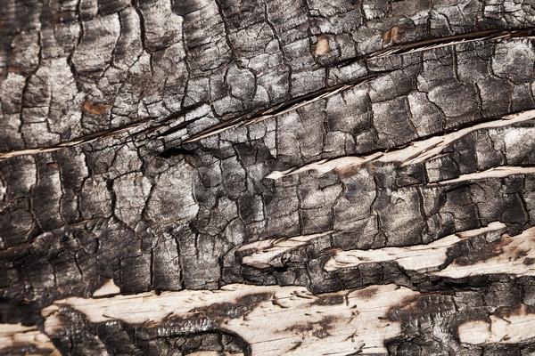 Burnt Wood Macro Stock photo © eldadcarin