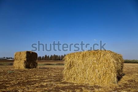 Hooi veld twee groot boom voedsel Stockfoto © eldadcarin