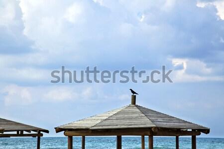 Karga plaj üst dramatik bulutlu Stok fotoğraf © eldadcarin