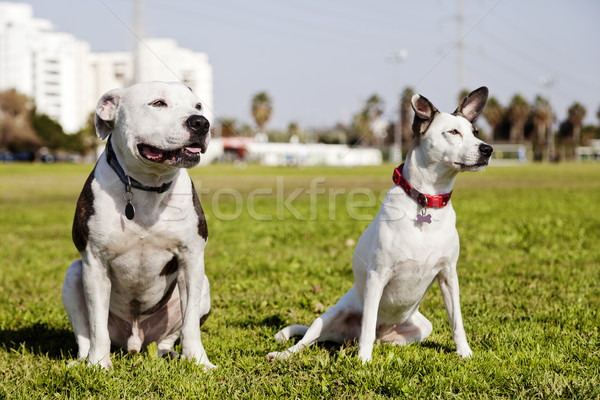 Stock photo: Two Dogs in the Park
