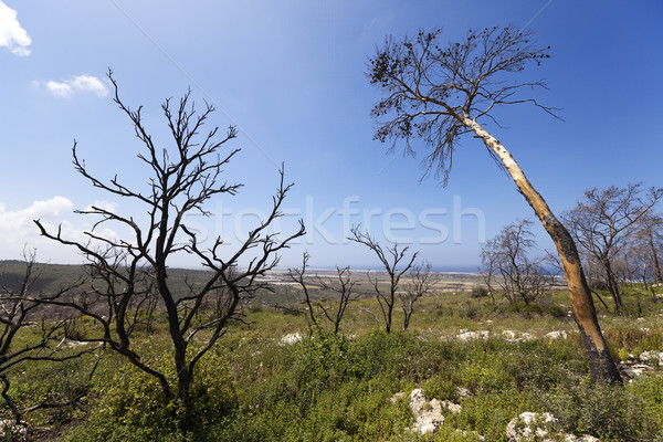 Foresta Hill Israele incendi boschivi anno terra Foto d'archivio © eldadcarin
