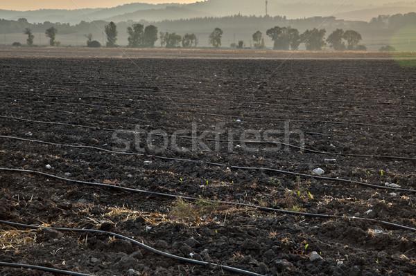 сумерки сельскохозяйственный области север Израиль закат Сток-фото © eldadcarin