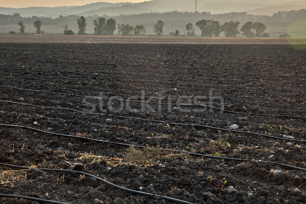 Plowed Filed at Dusk Stock photo © eldadcarin
