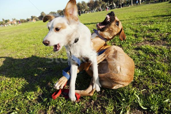 Due cani giocare parco mista razza Foto d'archivio © eldadcarin