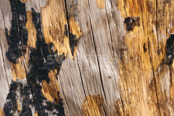 Burnt Tree Trunk Close Up Stock photo © eldadcarin