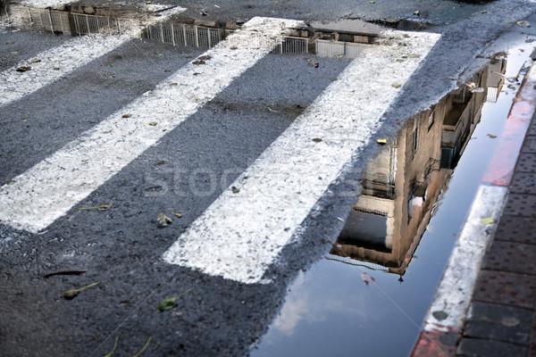 Riflessione costruzione zebra Foto d'archivio © eldadcarin