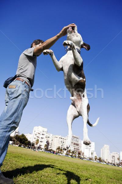 Kutya ugrik étel pitbull tulajdonos tart Stock fotó © eldadcarin