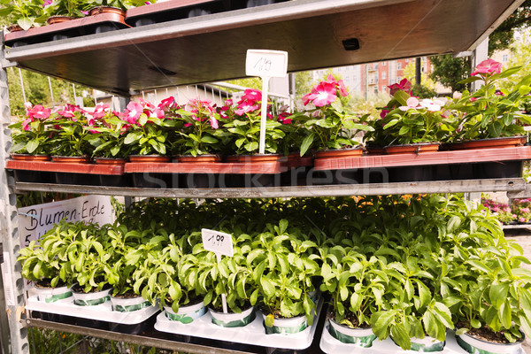 Plant Nursery Flower Planters at Mauerpark Flea Market Berlin Ge Stock photo © eldadcarin