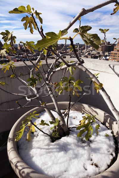 Zimą roślin panoramę zachód w. Manhattan Zdjęcia stock © eldadcarin
