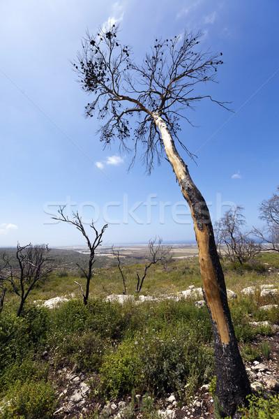Floresta colina Israel incêndio florestal ano terreno Foto stock © eldadcarin