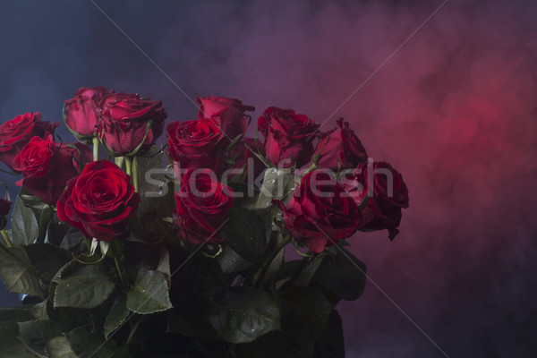 red roses on a red and blue smoky background Stock photo © Elegies