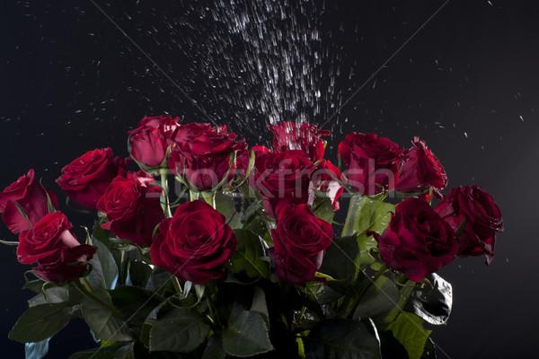 Rose rosse acqua buio luce sfondo Foto d'archivio © Elegies