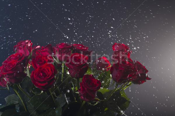 Rose rosse acqua colorato bouquet luce Foto d'archivio © Elegies