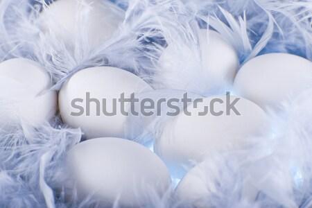 белый яйца мягкой нежный синий Сток-фото © Elegies