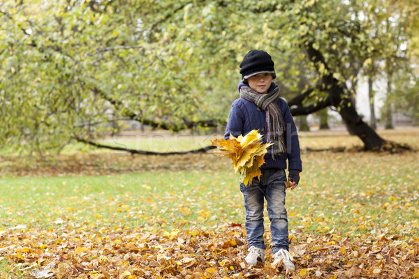 Autunno 5 anni ragazzo foglie verde Foto d'archivio © Elegies