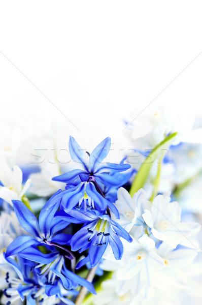 Stok fotoğraf: Bahar · çiçekleri · ilk · çiçek · çiçekler