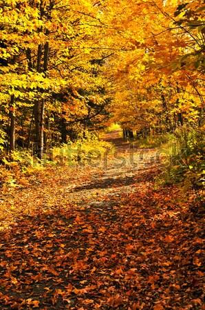 Sonbahar yol iz grup renkli ağaçlar Stok fotoğraf © elenaphoto