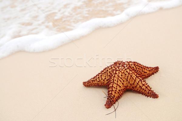 Zeester zeegolf zanderig tropisch strand water natuur Stockfoto © elenaphoto