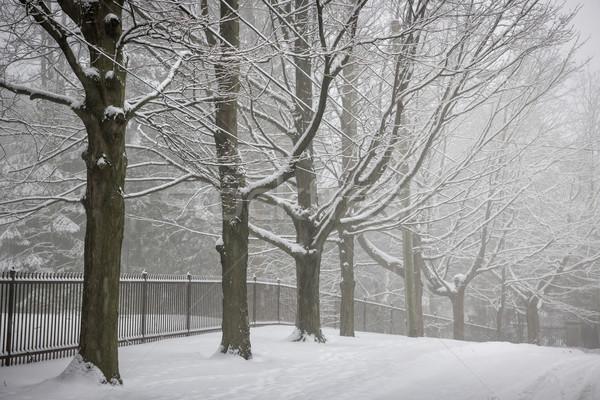 Invierno árboles carretera cerca cubierto nieve Foto stock © elenaphoto