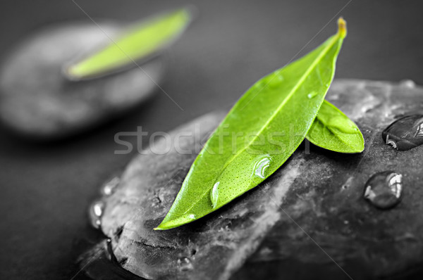 Stones with green leaves Stock photo © elenaphoto