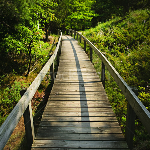 Wooden walkway through forest Stock photo © elenaphoto