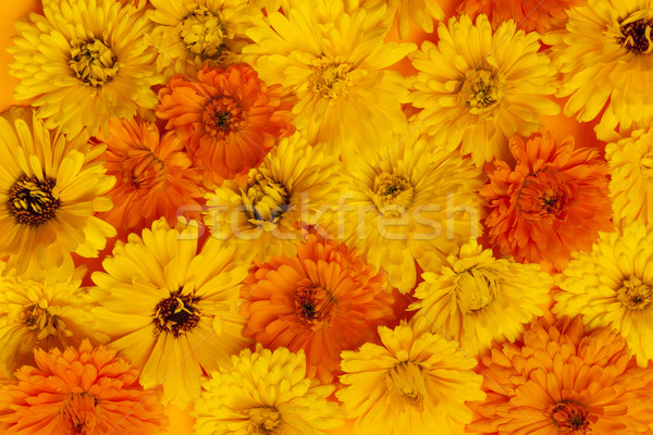Calendula flowers background Stock photo © elenaphoto