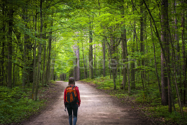 Hiker on forest trail Stock photo © elenaphoto