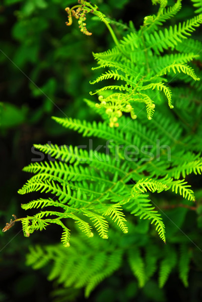 Varen groene bladeren groeiend hout zomer Stockfoto © elenaphoto