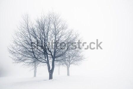 Zdjęcia stock: Zimą · drzew · przeciwmgielne · bezlistny · kopia · przestrzeń
