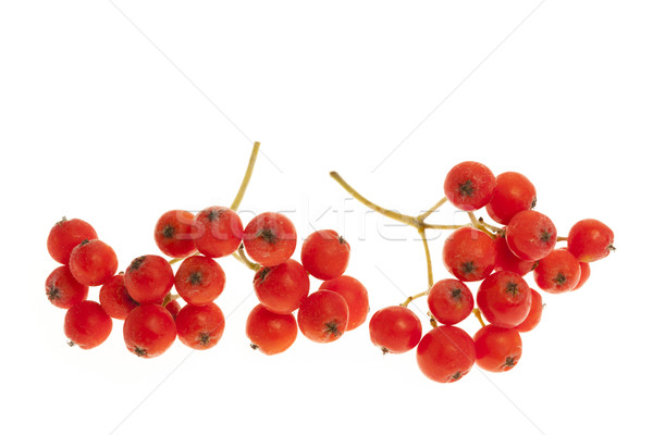 Dağ kül meyve kırmızı karpuzu Stok fotoğraf © elenaphoto