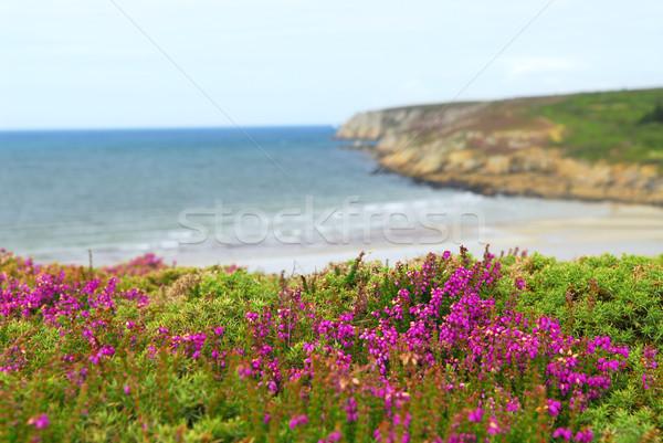 Zdjęcia stock: Wybrzeża · Europie · ocean · kwiaty · wody