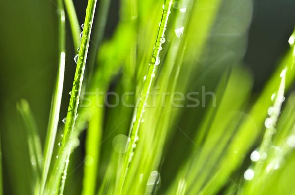 Zdjęcia stock: Zielona · trawa · naturalnych · trawy · streszczenie · charakter