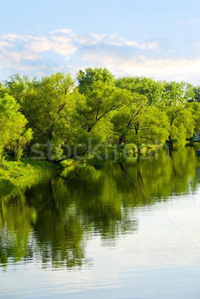 Trees reflecting in river Stock photo © elenaphoto