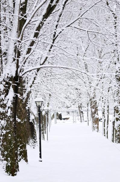 Lane in winter park Stock photo © elenaphoto