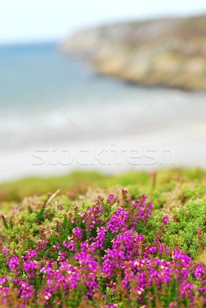 Zdjęcia stock: Wybrzeża · Europie · ocean · kwiaty · morza