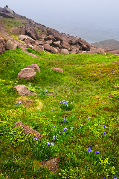 Atlantic coast in Newfoundland Stock photo © elenaphoto
